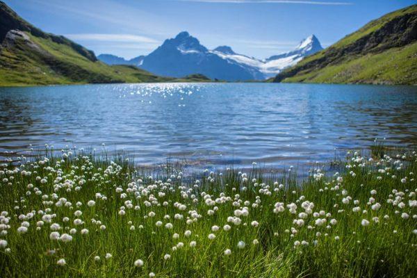 Bachalpsee, Bachsee, Grindelwald, Bern, Switzerland