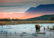 Katmai National Park and Preserve, Alaska, United States