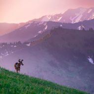 Olympic National Park, Washington, United States
